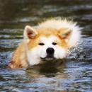 maru_swimming.jpg